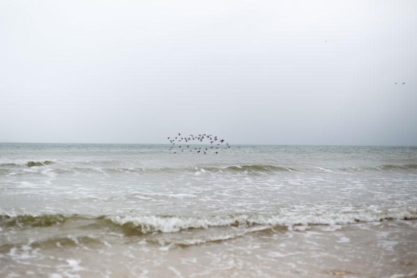 photographie envol d'oiseaux
